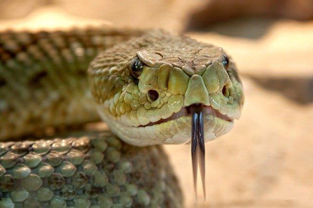 La historia de la mítica cabeza de serpiente